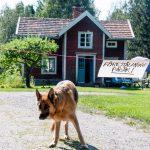 Föreställning pågår, hunden Esther vaktar